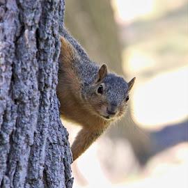 Hello, Squirrel! by Rita Flohr - Animals Other Mammals ( mammal, squirrel, small mammal )