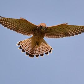 by Marcia Gain - Animals Birds