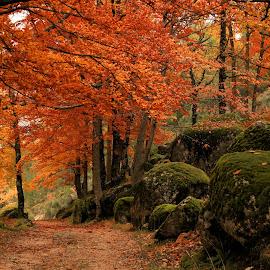 by Edmundo Manuel - Landscapes Forests