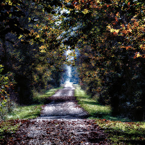 The Right Path by Scott Bryan - City,  Street & Park  City Parks ( walking, tree, nature, autumn, green, fall, path, trees, landscape )