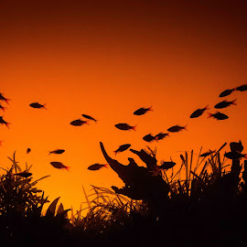 Sunset by Ken Baynard - Animals Fish