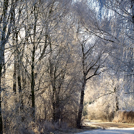 by Helena Jirasová - Landscapes Weather ( journey in the winter )