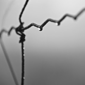 Not alone by David Vanveen - Abstract Water Drops & Splashes ( fence, black and white )