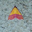 Pink-bordered Yellow Moth