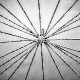Roped by Jim Signorelli - Black & White Abstract
