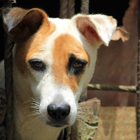 Dolly by Vivek Chethan Muliya - Animals - Dogs Portraits ( animals, dogs, portraits )