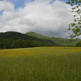 Mountain Field by Thomas Shaw - Landscapes Prairies, Meadows & Fields ( clouds, mountain, grass, green, white, yellow, leaves, landscape, field, mountains, sky, blue, trees, landscape photography, flowers, smoky mountains )