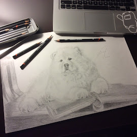 Chow by Richie Fernaldi - Drawing All Drawing ( #drawing, #dog, #draw, #animal, #sketching, #sketch, #pencil )