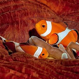 Cuddled in by Richard ten Brinke - Animals Fish