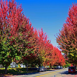 Fall is in the air by Will McNamee - City,  Street & Park  Neighborhoods ( dld3us@aol.com, gigart@aol.com, aundiram@msn.com, danielmcnamee@comcast.net, mcnamee2169@yahoo.com, ronmead179@comcast.net )