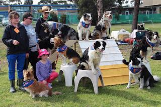 dog training workshop wallan