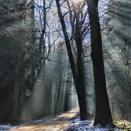 by Arjo van Timmeren - City,  Street & Park  City Parks ( fog, sunset, trees, sunshine, forest )