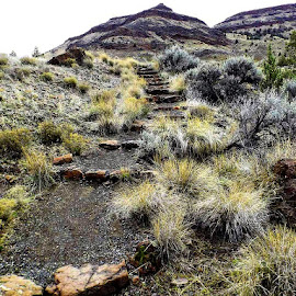 John day fossil beds by D.j. Nichols - Instagram & Mobile Android ( john day fossil beds )