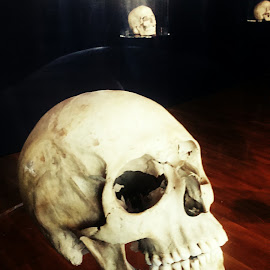 Skull by Nikol Cvetković - People Body Parts ( skull, old, head )