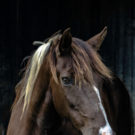 by Jackie Nix - Animals Horses ( mare, face, vertical, equine, equis, herbivore, mane, horse, agriculture, farm animal, beauty,  )