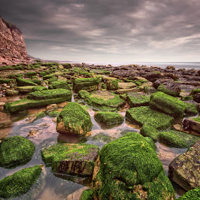 1 hour 30 minutes by Mark Leader - Landscapes Beaches ( shore, cliffs, sea weed, pett level, hdr, green, art, moss, canvas, beach, big stopper, print, coast, decor, wall art, wall hanging, poster, long exposure, weeds, rocks )