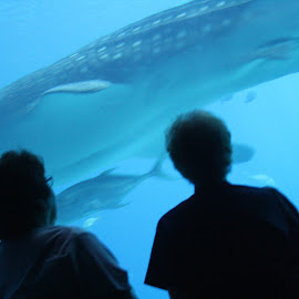Whale Shark, Mom and Me by Paula Warren - Animals Fish ( aquarium, whale shark, mom,  )