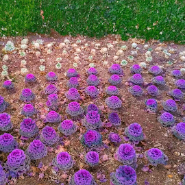 Purple Beings by Cuitlahuac Christopher Martinez - Nature Up Close Gardens & Produce ( nature, plants, garden )