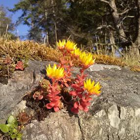Rock plants by Karen McGregor - Nature Up Close Other plants (  )