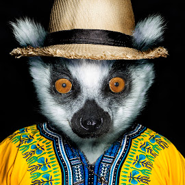 Louis the Lemur by Michal Challa Viljoen - Digital Art Animals ( jacket, person, zoo, advertising, edit, yellow, lemur, composite, photography, animal, photoshop,  )