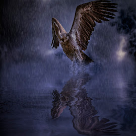 vulture in the rain by Egon Zitter - Digital Art Animals ( water, vulture, bird of prey, rain, animal )