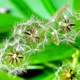 Wild grass by Asif Bora - Nature Up Close Other plants