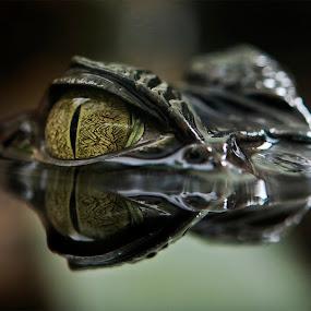 I look at you by Massimo Mazzasogni - Animals Reptiles ( fantastic wildlife )