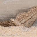 Slender-sand Wave