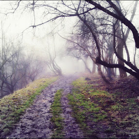 Opole by Marta Bednarska - Landscapes Forests ( fog landscapes )