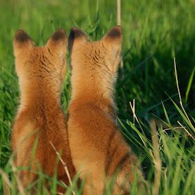 by Rolland Gelly - Animals Other Mammals