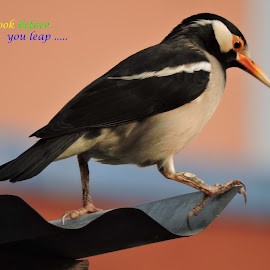 Bird by SANGEETA MENA  - Typography Quotes & Sentences