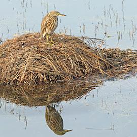 Reflections by Abhishek Singh - Novices Only Wildlife