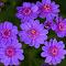 Flower 593~.jpg