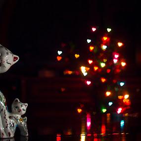 lovely cat. :) by Samet Işık - Public Holidays Christmas ( love, cat, bokeh filter, christmas, bokeh )