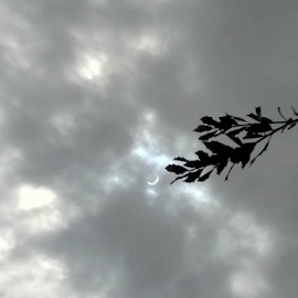 Solar Eclipse 2018 by Melanie Campos - Nature Up Close Other Natural Objects ( solar eclipse, tree, clouds )
