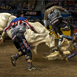 Bull attack by Dries Fourie - Sports & Fitness Rodeo/Bull Riding