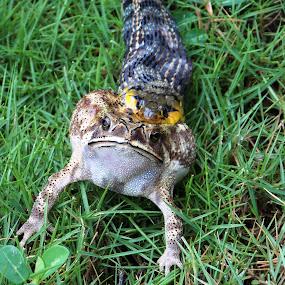 the breakfast by Falguni Marwadi - Animals Reptiles ( animals, wild life, travel, snakes )
