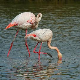 Les pattes dans la vase by Gérard CHATENET - Animals Birds