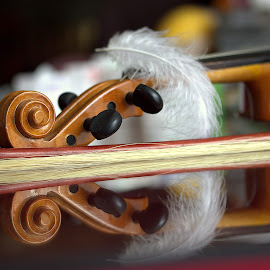 by Biljana Nikolic - Artistic Objects Musical Instruments