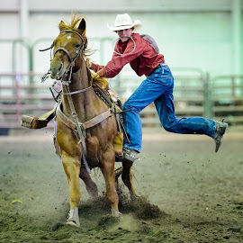 Dismount by Jimmy Rash - Sports & Fitness Rodeo/Bull Riding ( thompson arena, rodeo )