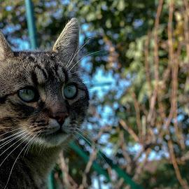 cat by Alen Zita - Animals - Cats Portraits ( cat, osijek, autumn, grass, croatia )