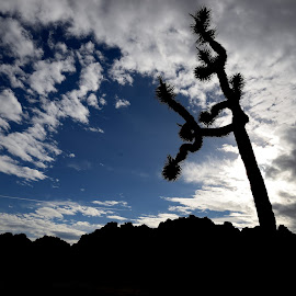 Single Joshua Tree by Carsen Popelka - Landscapes Deserts ( clouds, national park, sky, wide angle, joshua tree,  )