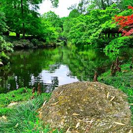 Japanese Gardens by Robin Stover - City,  Street & Park  City Parks ( park, tree, green, botanical, garden, pond )