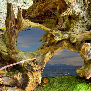 Dash Point State Park 060 02.jpg