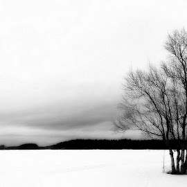 Lonely by Marko Paakkanen - Black & White Landscapes ( tranquil, sky, winter, tree, black and white, ice, white, forest, black )