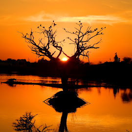 Before the sunset... by Shambaditya Das - Novices Only Objects & Still Life ( #dusk, #kutch, #nature, #india, #sunset, #tree, #gujrat, #serene,  )