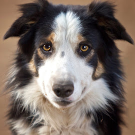by Wendy Berning - Animals - Dogs Portraits