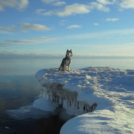 Upper MI by Ryan Swanson - Animals - Dogs Portraits (  )