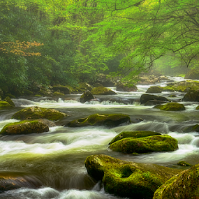 foggy morning on the river  by Ernie Page - Landscapes Waterscapes ( water, national park, fog, great smoky mountains national park, streams, landscape, spring, river )