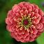 by Lori Rose - Flowers Single Flower